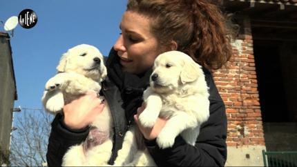 RUGGERI: Telepatia canina