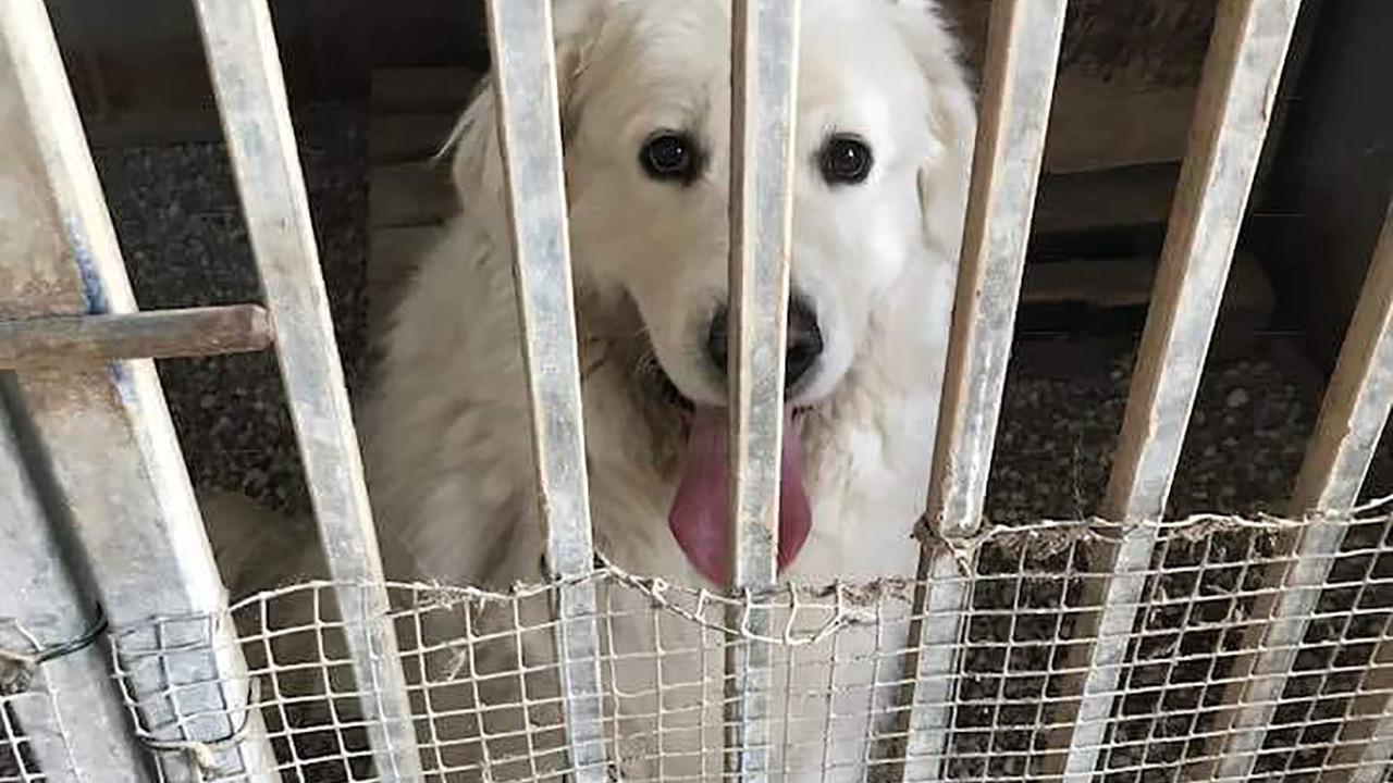Assolto il cane Medo, dopo gli arresti domiciliari