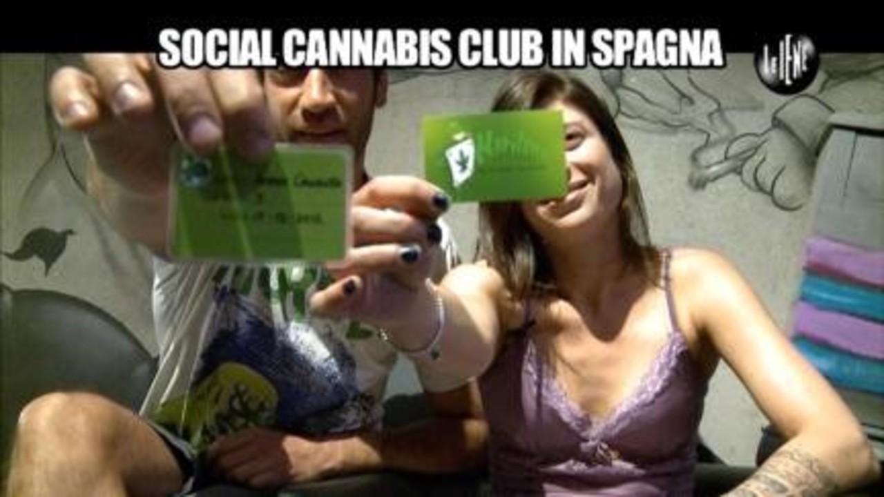 Sequestro di cannabis light. A rischio l'intero comparto?:I nostri servizi