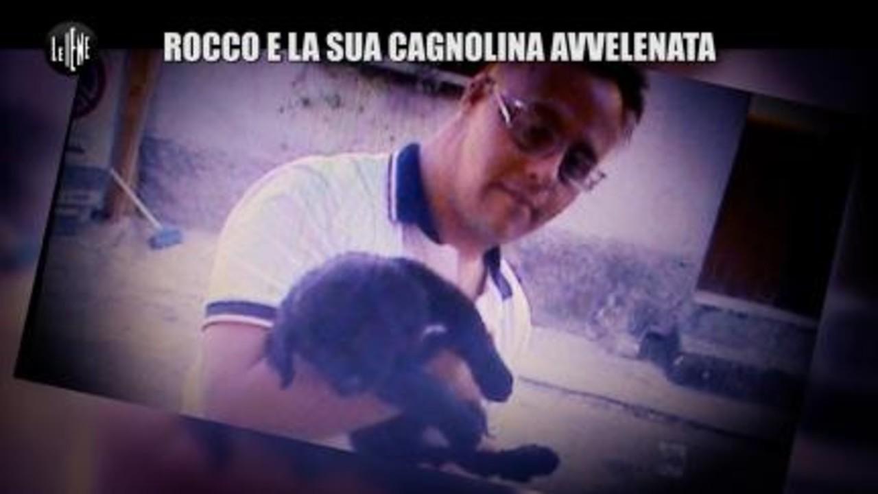 NINA: Rocco e la sua cagnolina avvelenata
