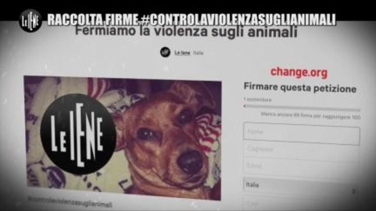 NINA: Raccolte firme #controlaviolenzasuglianimali