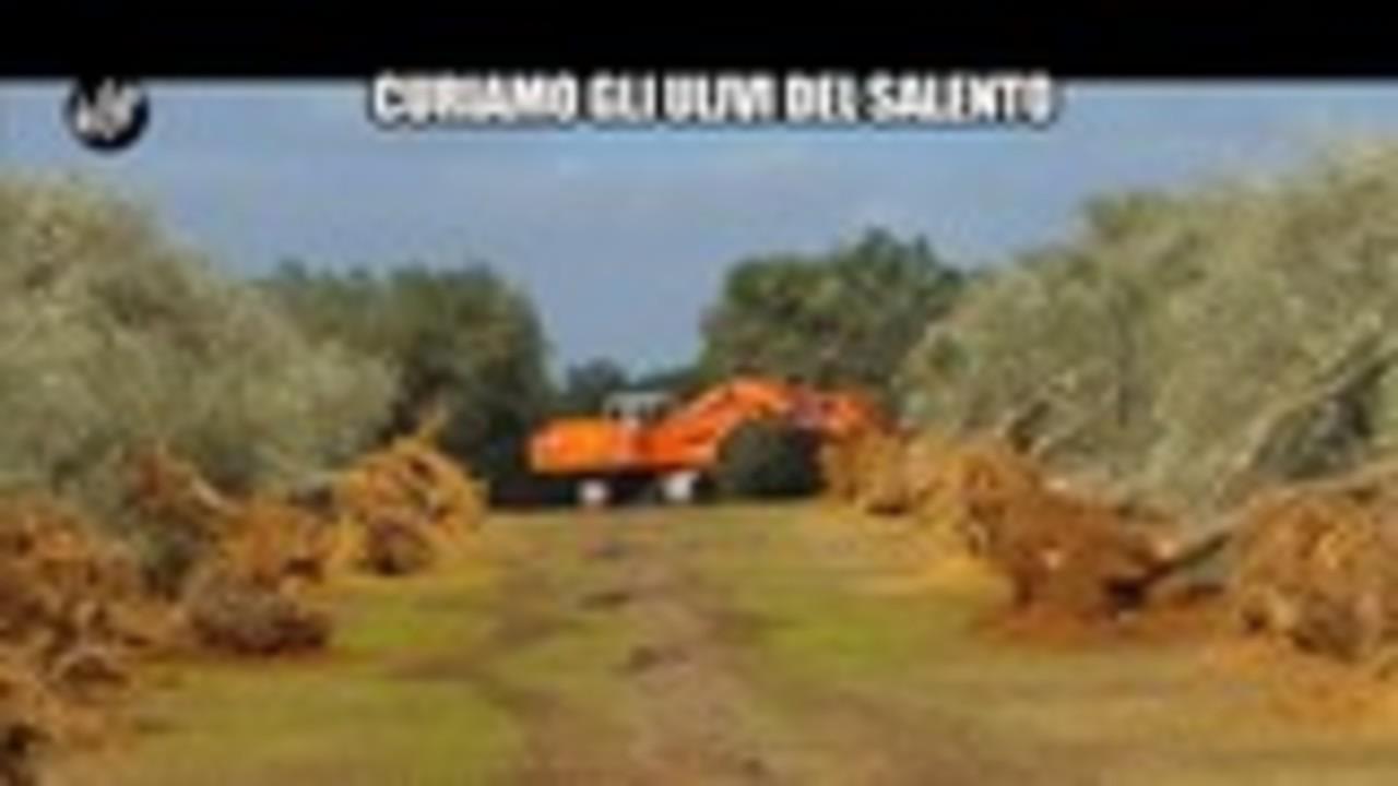 TOFFA: Curiamo gli ulivi del Salento
