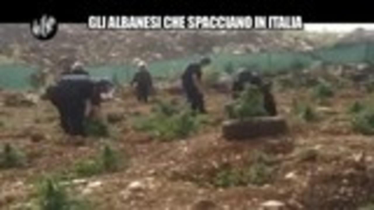 PELAZZA: Gli albanesi che spacciano in Italia