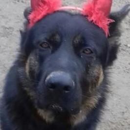cane Kuma massacrato ucciso mascotte bambini Brescia Angelo Mia