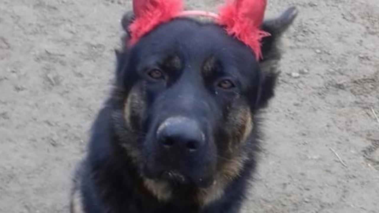 Brescia: massacrato il cane Kuma, mascotte dei bambini