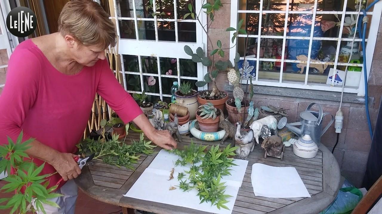 Rita Bernardini legalizzazione cannabis video