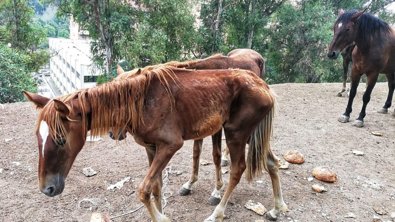 Affama i suoi cavalli e il pm poi glieli affida