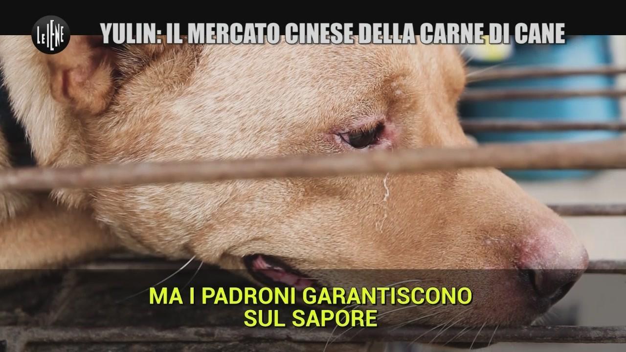 carne cane Cina Yulin mercato video