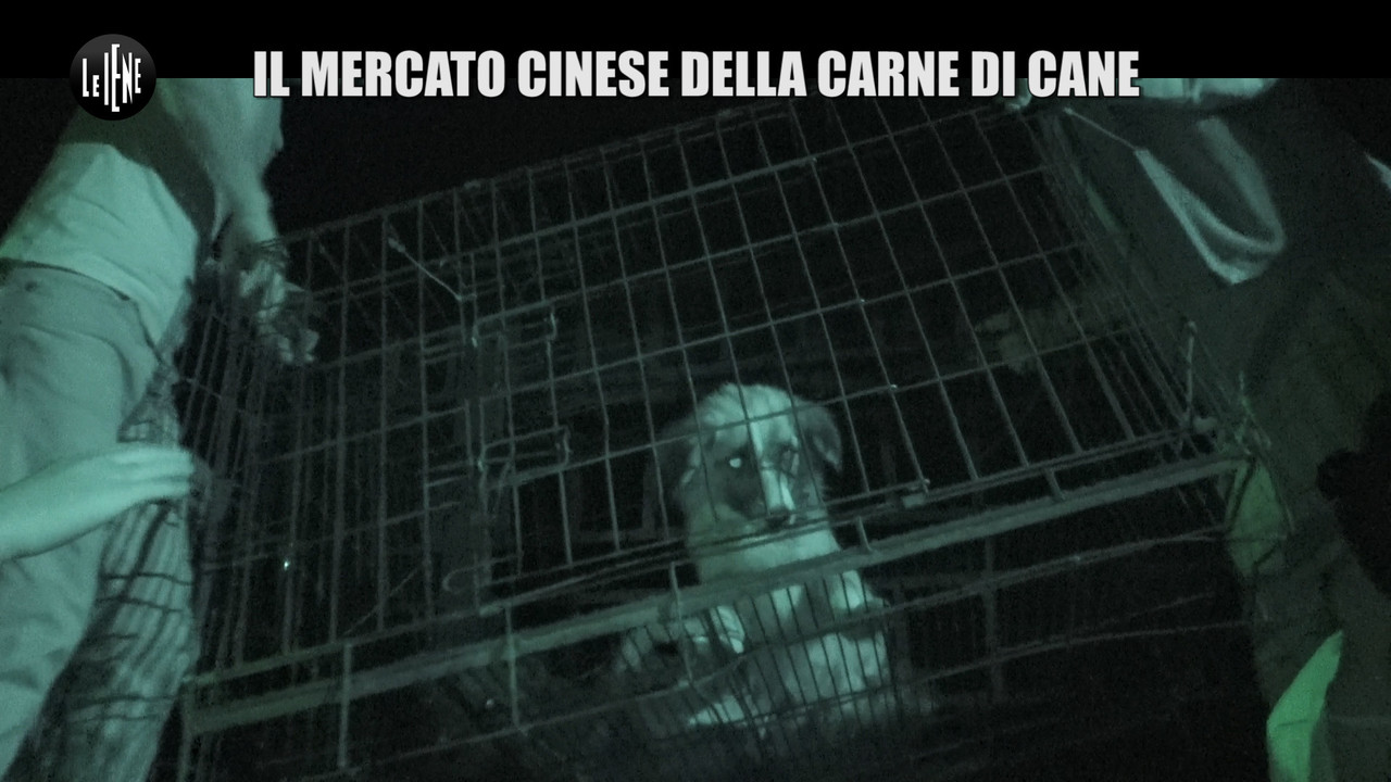Il mercato cinese della carne di cane: le foto