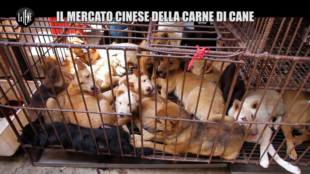 mercato cinese carne cane foto