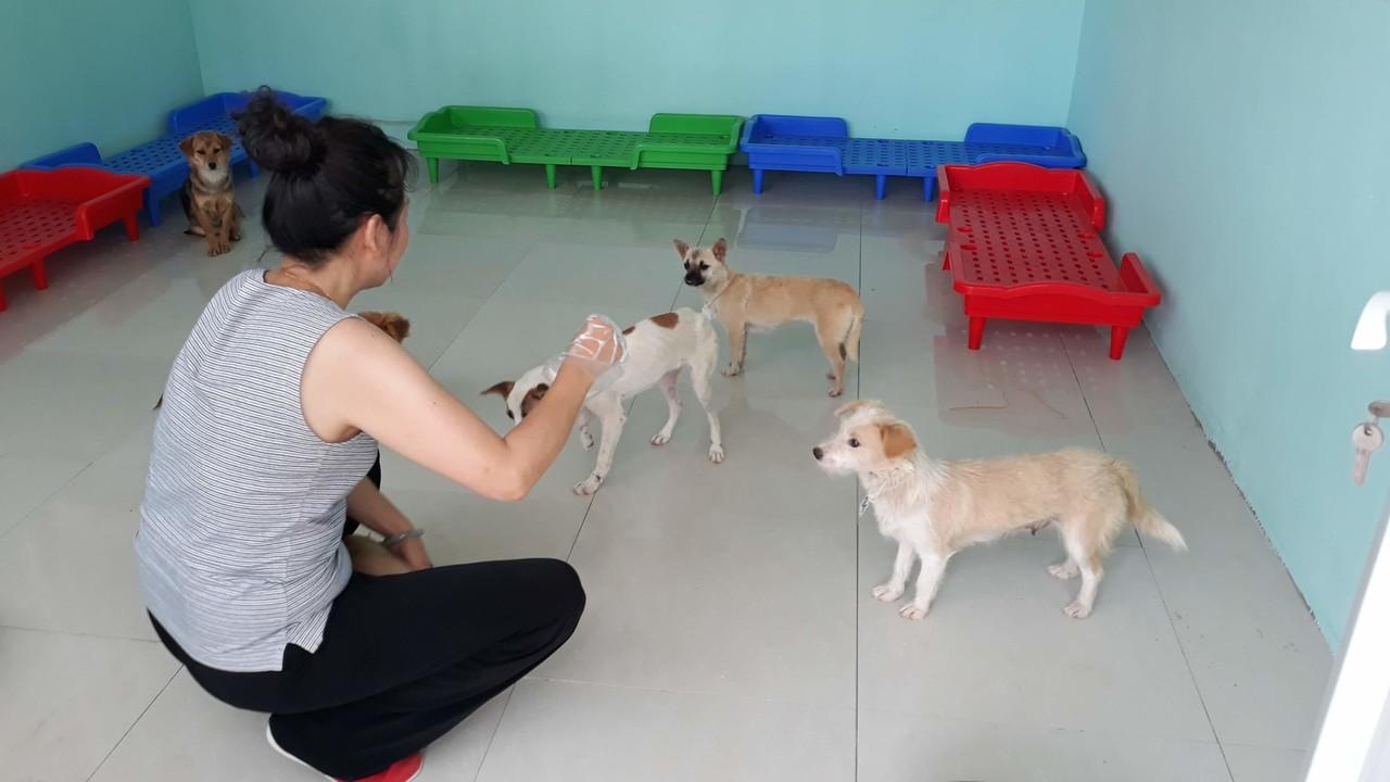 cani adozioni yulin