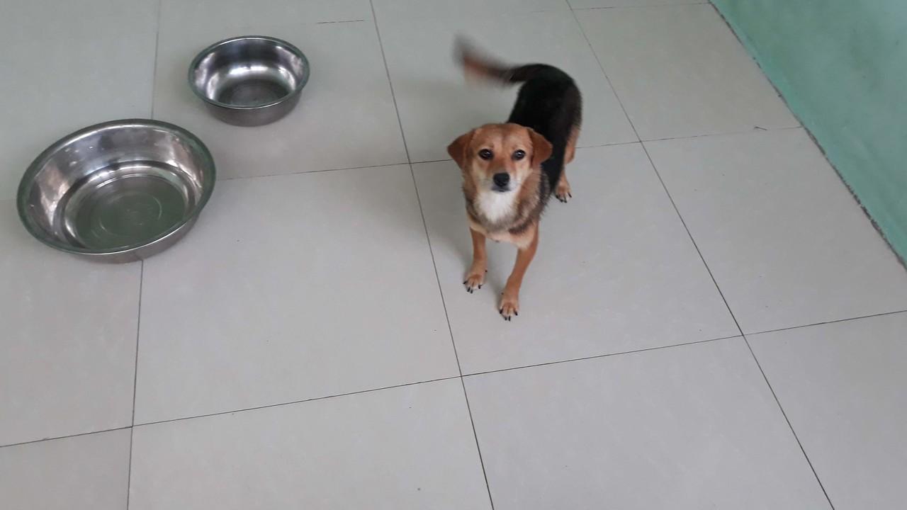 I cani che potete adottare
