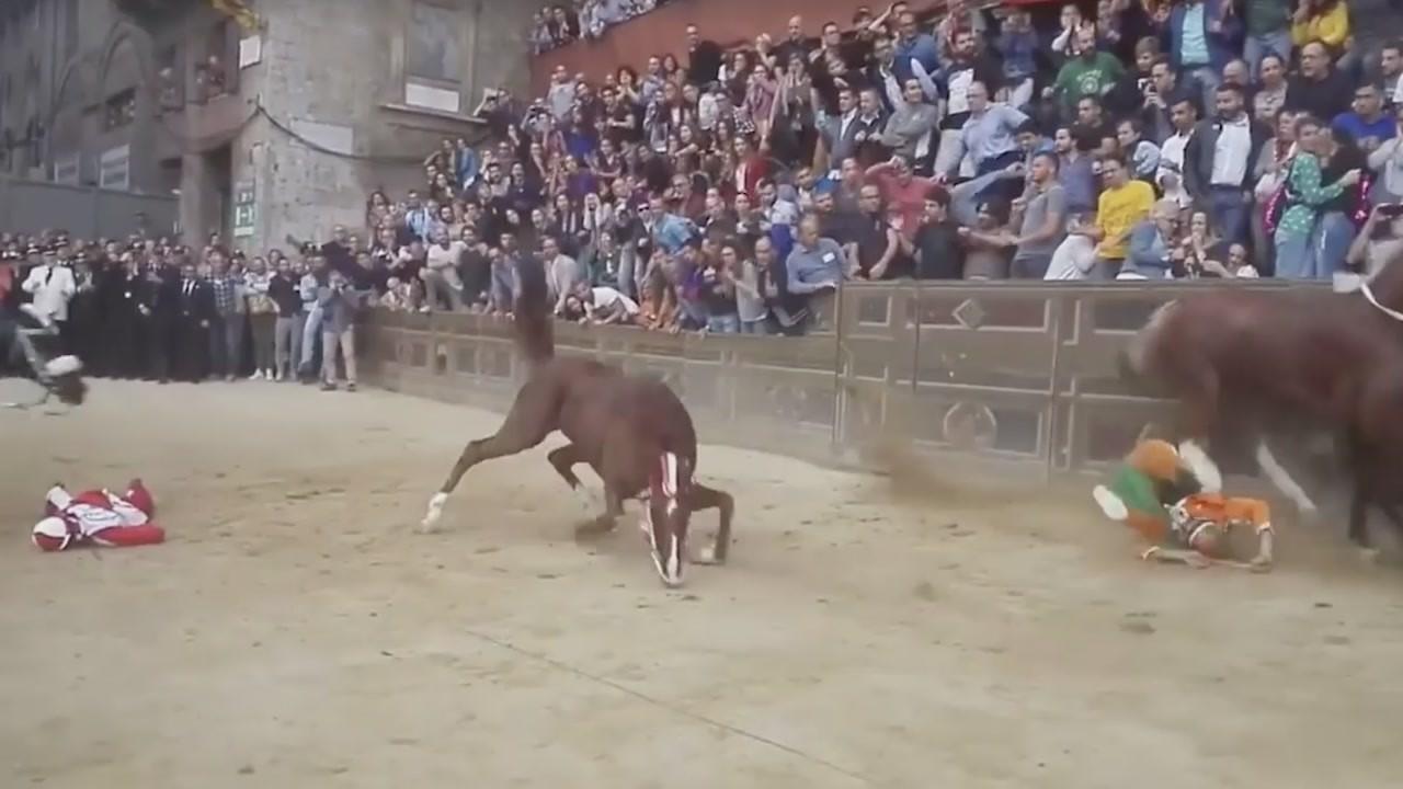 Palio di Siena morto il cavallo Raol