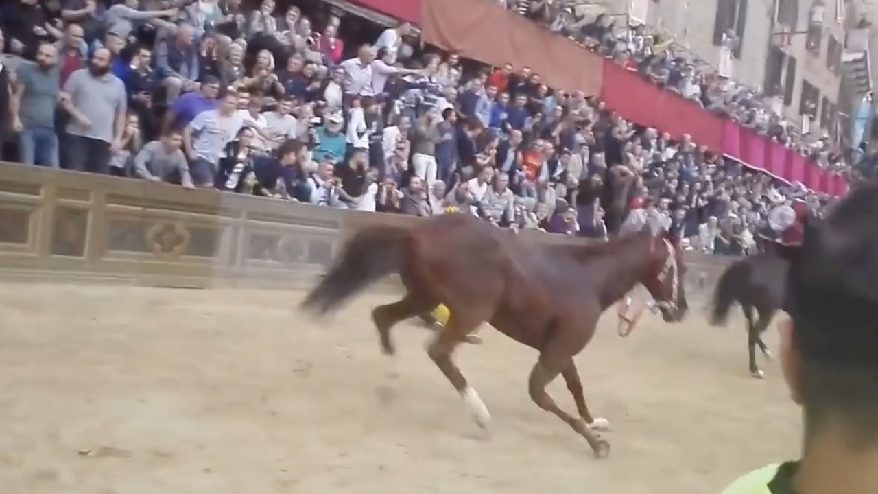 "Palio di Siena, morto il cavallo Raol: ""Soccorsi in ritardo?"" 