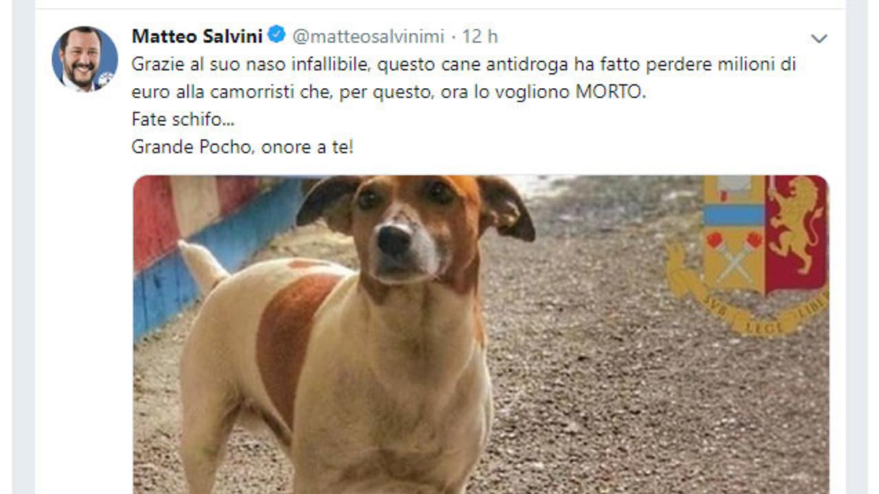 Salvini rilancia la notizia del cane minacciato. Ma è una bufala