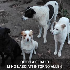 morti cani cuccioli ariano irpino avellino assassino denuncia appello carabinieri