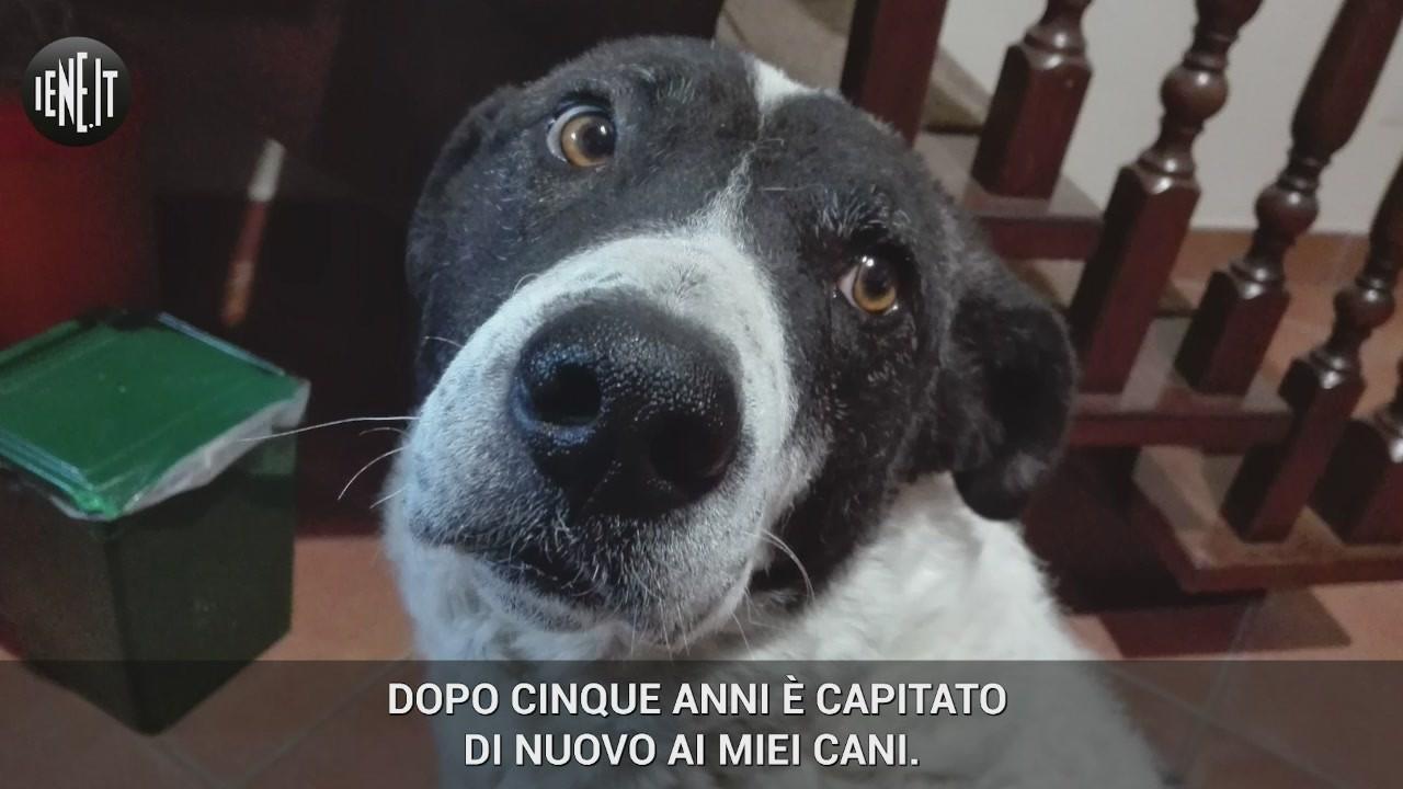 cani morti ariano irpino assassino veleno animali carabinieri appello uccisi