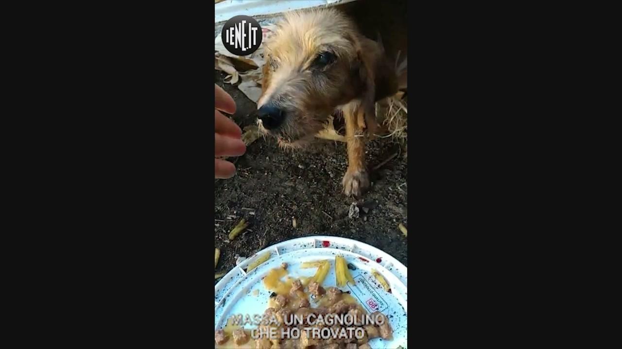 randagio cane randagismo sicilia messina tribunale denuncia