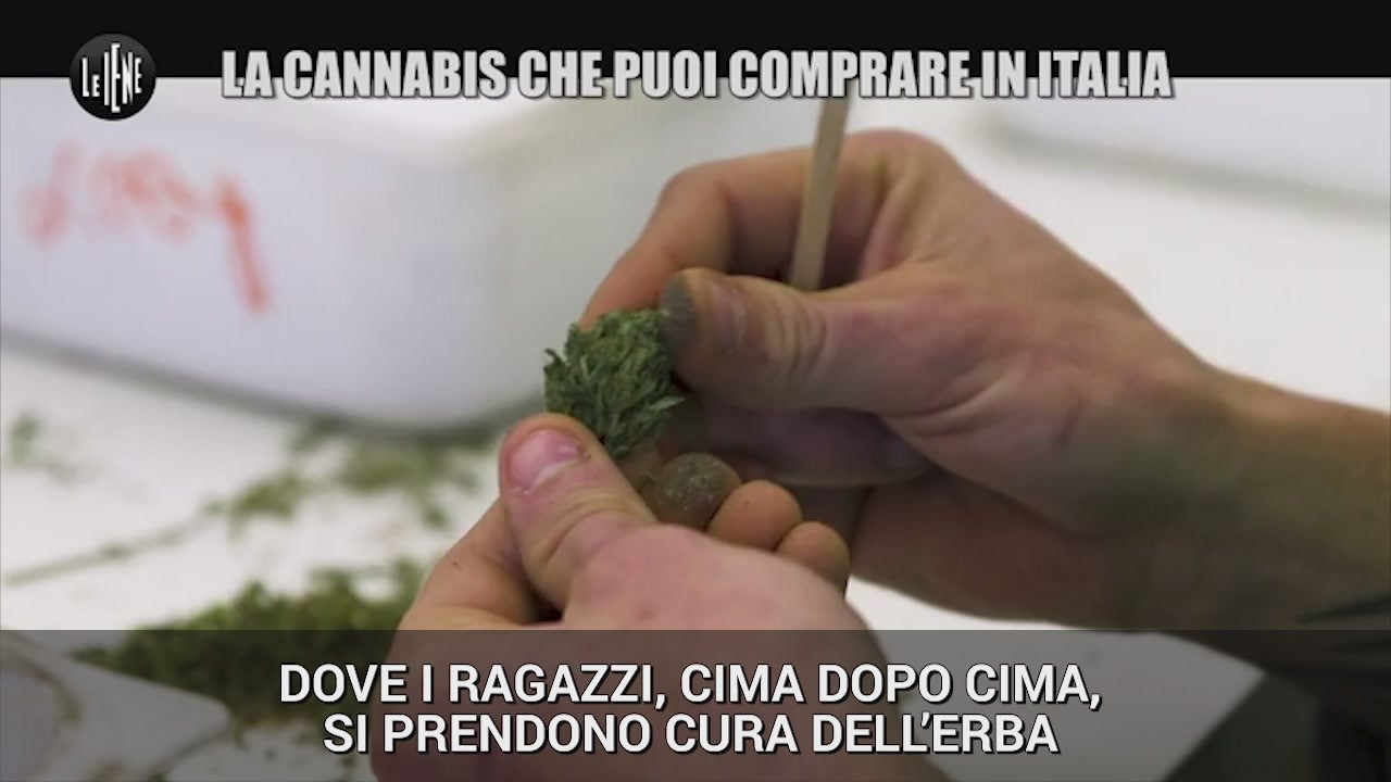 cannabis legale light easyjoint