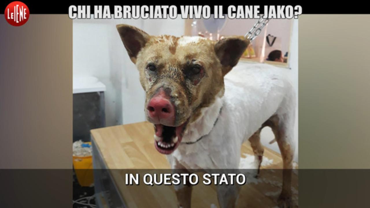 Il cane Jako è stato bruciato vivo | VIDEO