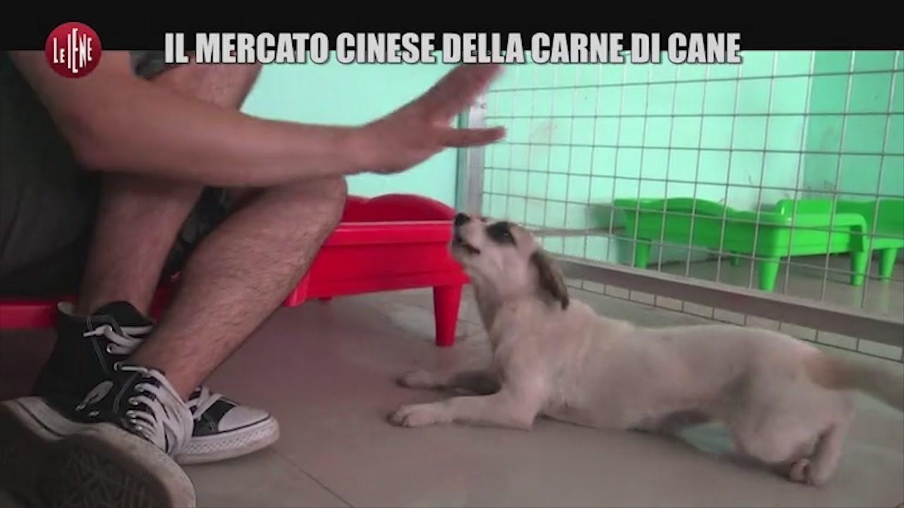 cani yulin peste clinica adozioni