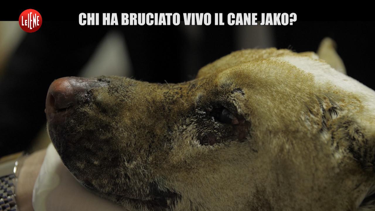 POLITI: Storia del cane Jako, legato e bruciato vivo