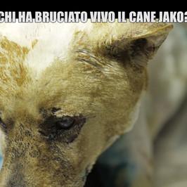 Jako cane bruciato vivo giornata mondiale diritti animali