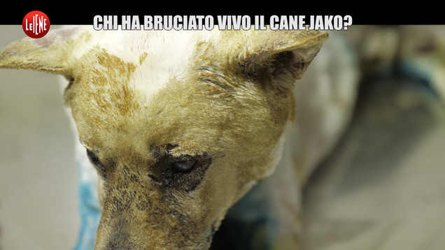 Giornata dei diritti degli animali: per Jako, il cane bruciato vivo | VIDEO