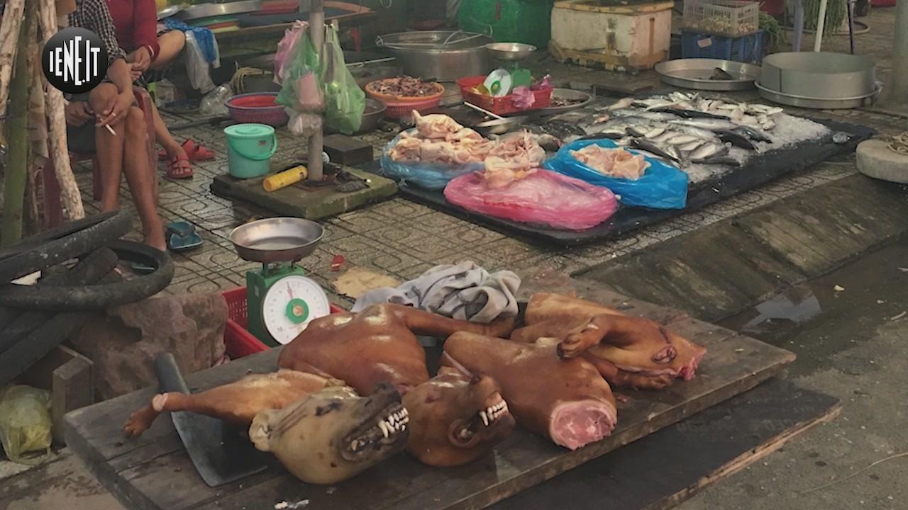 vietnam cani carne macellazione yulin animali