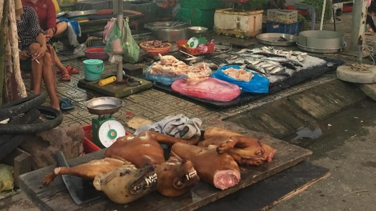 L'orrore in Vietnam: in vacanza fra i cani macellati | VIDEO