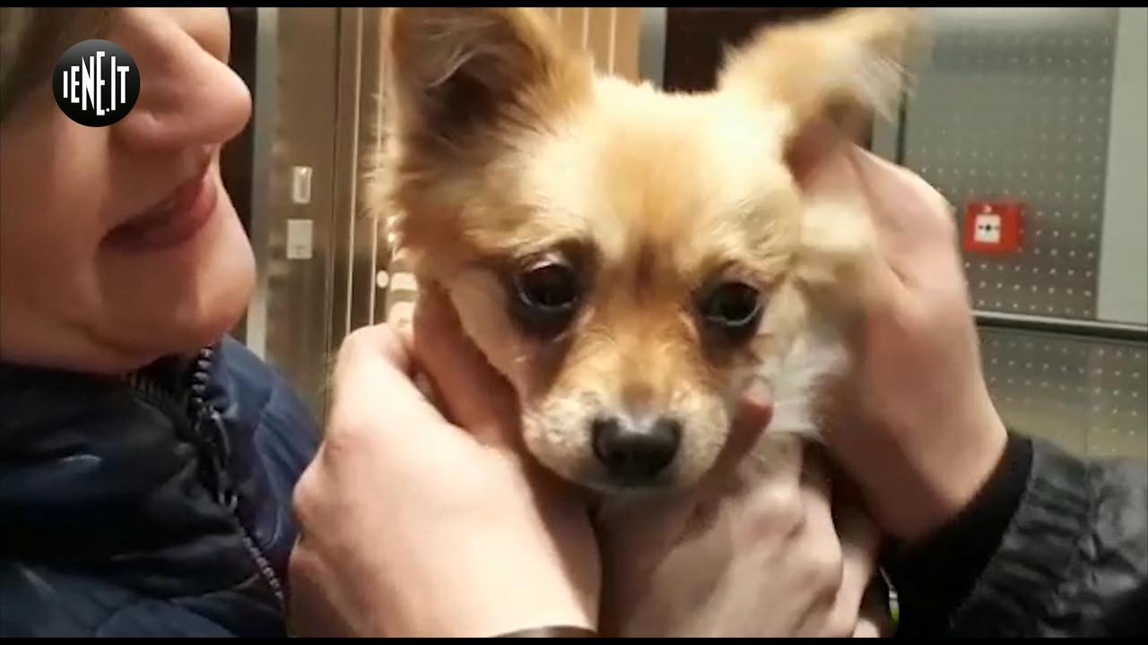 Yulin, il video dei cani salvati dal macello che vi spezzerà il cuore