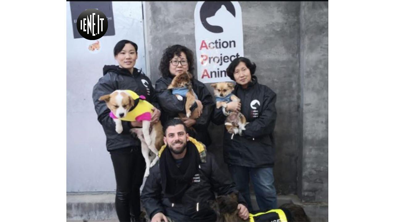 Le foto dei cuccioli salvati dal mercato della cinese carne di cane