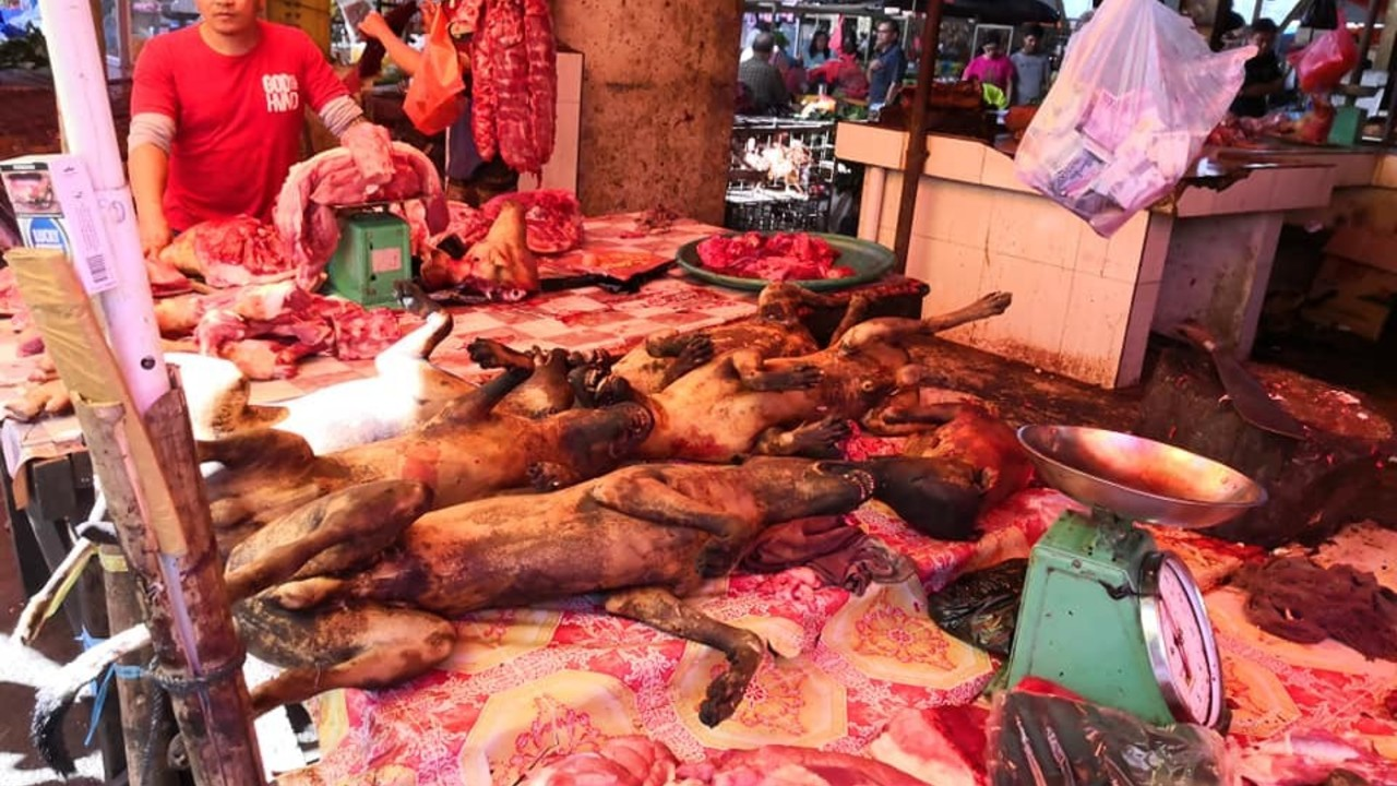 L'inferno per cani e gatti al mercato di Tomhon