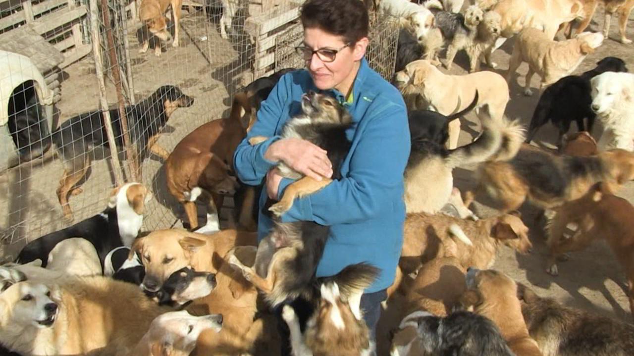 Donata e i suoi 216 cani devono rinunciare al terreno