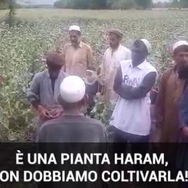 droga afghanistan oppio talebani isis contadini