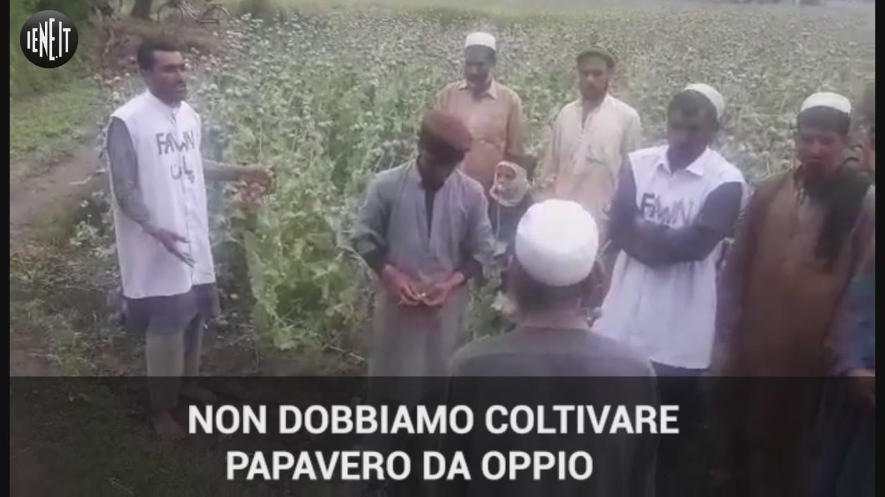 afghanistan oppio droga talebani contadini isis ong