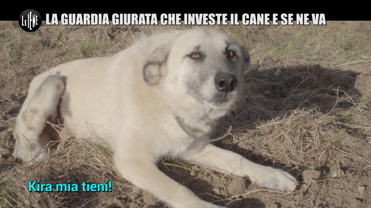 LA VARDERA: Investe un cane e non paga le cure perché è un randagio