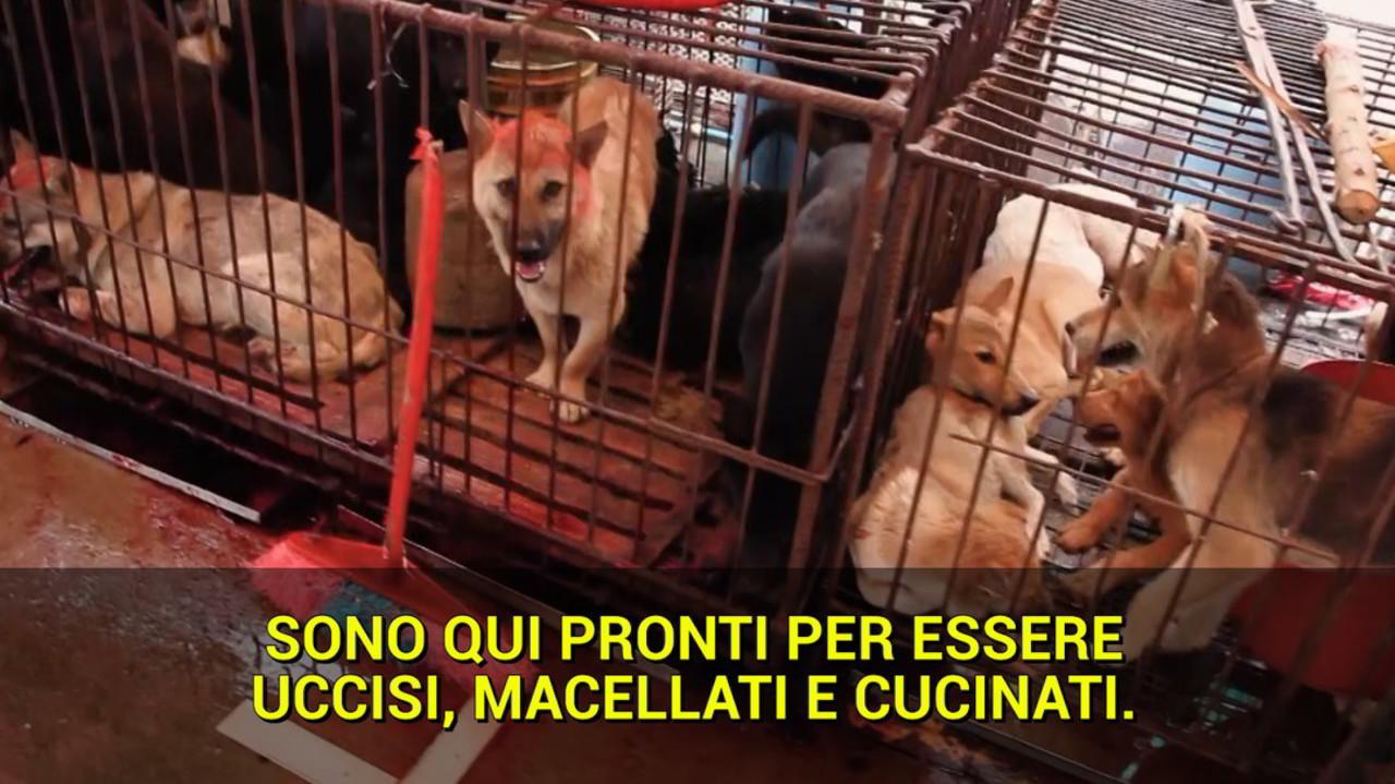 Carne di cane, chiude il più grande mercato della Corea