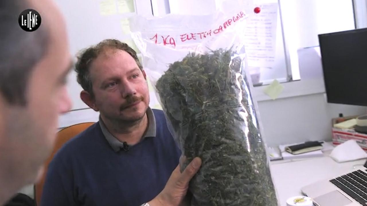 """Lotta alla cannabis, primo ricorso vinto: """"La legge è poco chiara"""""""