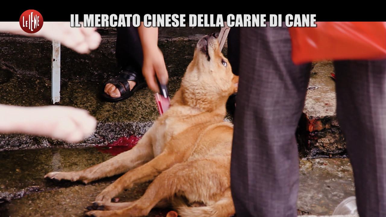 yulin mercato cinesi carne cani