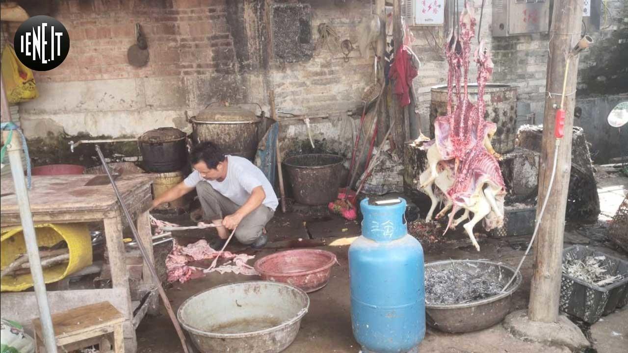 yulin foto mercato rivenditori carne cane cina