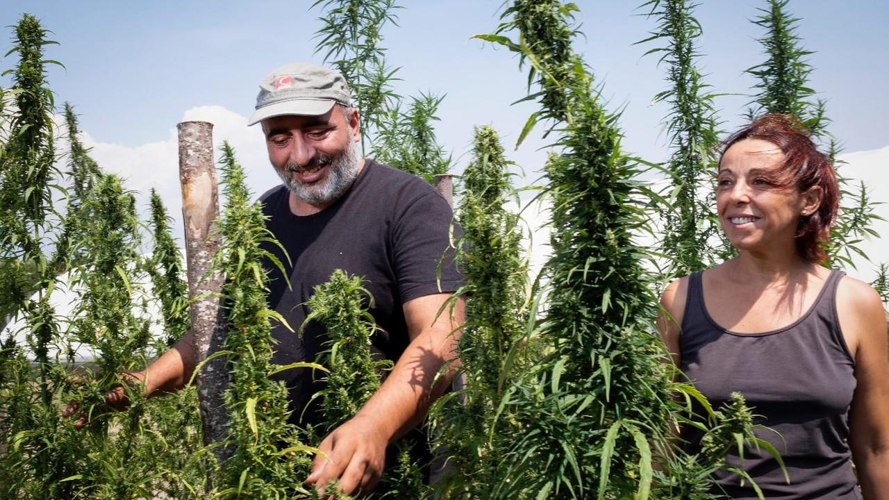 Cannabis light: il progetto di Salvatore Scuderi