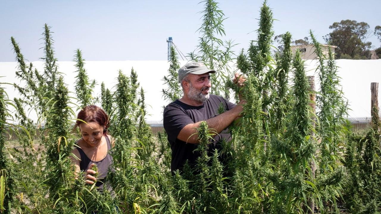 cannabis light salvini salvatore scuderi