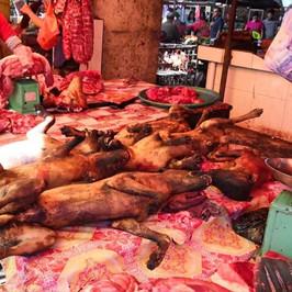 carne cane Cina Yulin Vietnam Asia