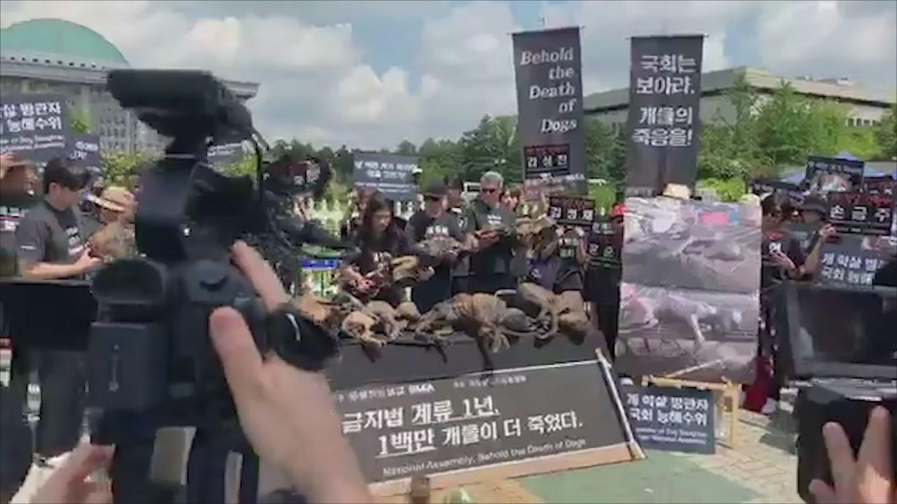 Kim Basinger contro macellazione cani Corea