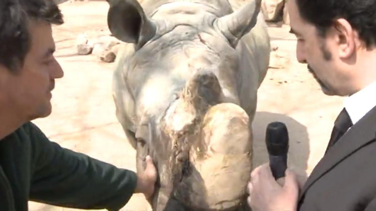 giornata ranger animali estinzione rinoceronti