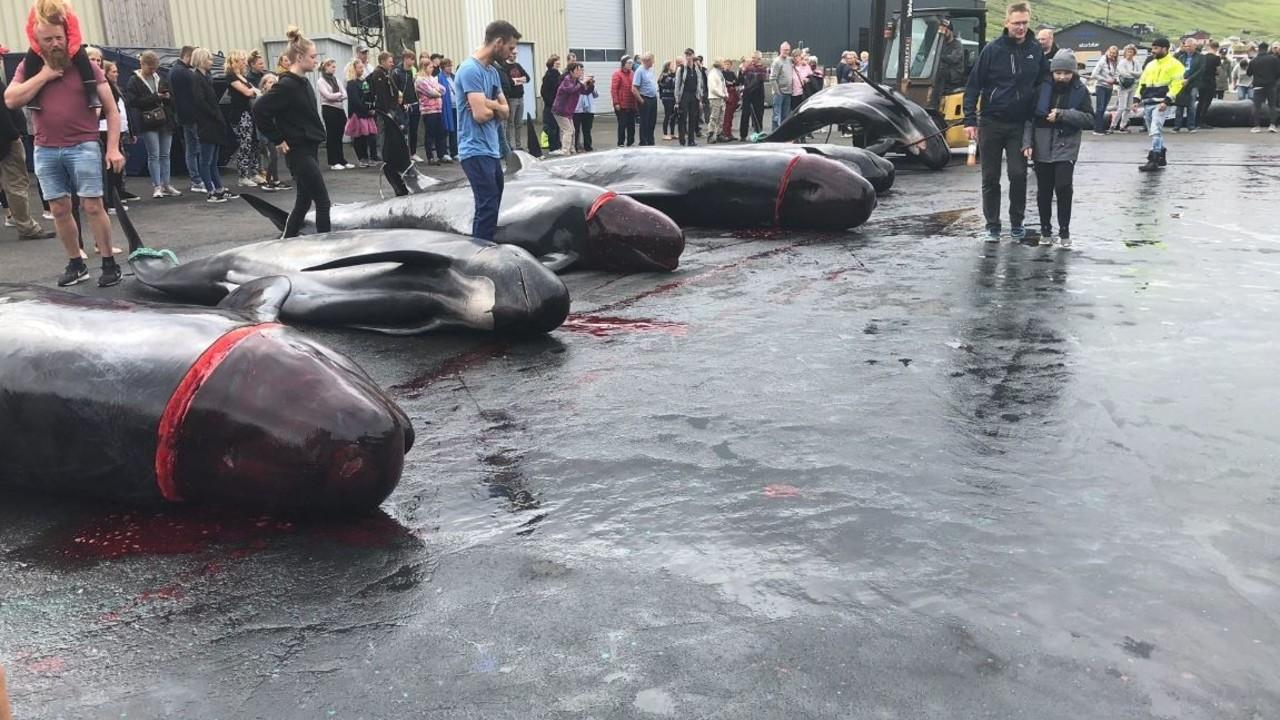 Caccia alle balene: la mattanza nel Nord Europa