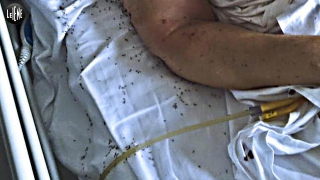 Ospedali da incubo: tornano le formiche al San Giovanni Bosco di Napoli | VIDEO
