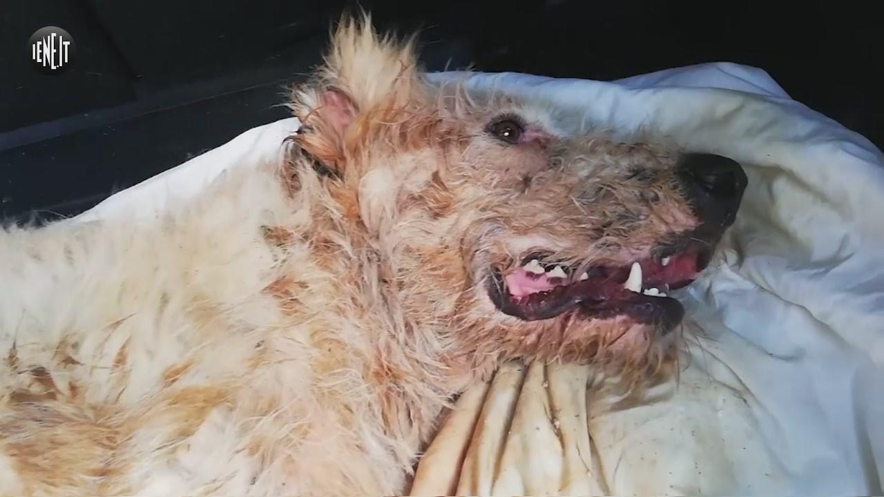 cane torturato maltrattamenti animali