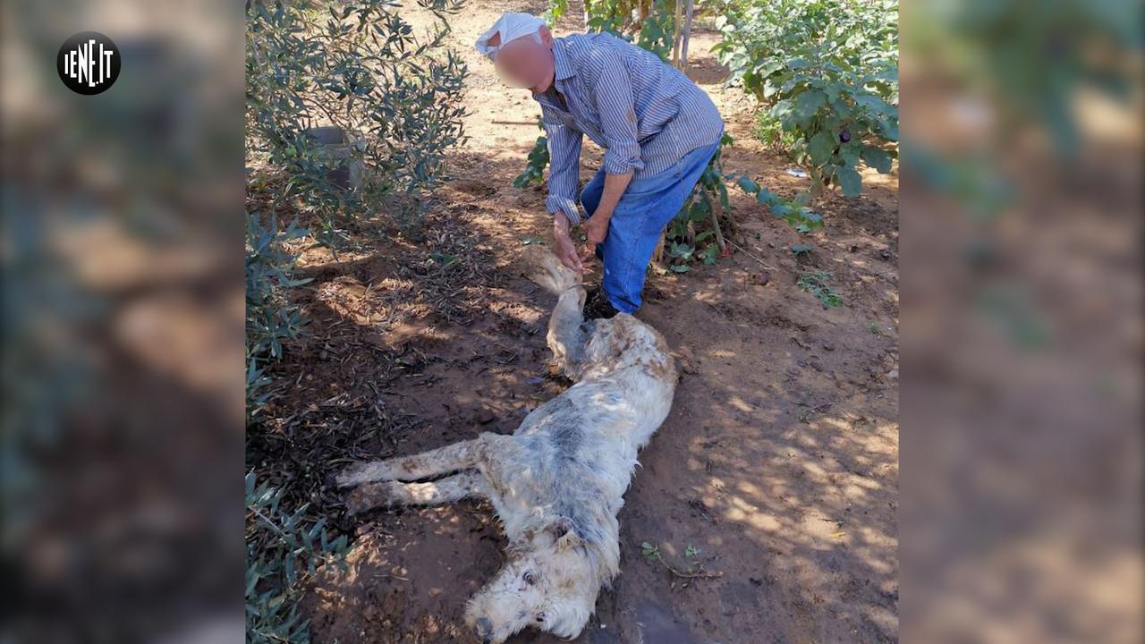 maltrattamenti animali cane ucciso